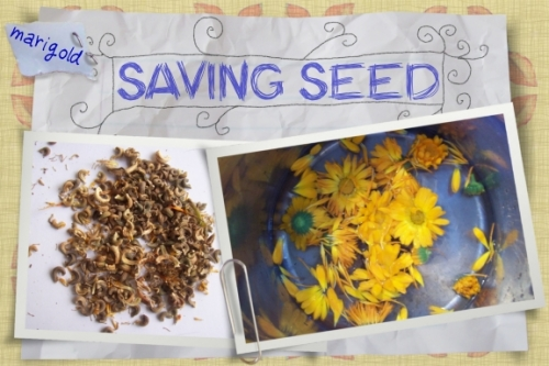 Seed Saving - What's it good for?